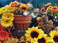 Venus,Cute Kitty Cat Kitten,Fall Colors,Sunflowers