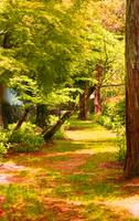 Green Pathway