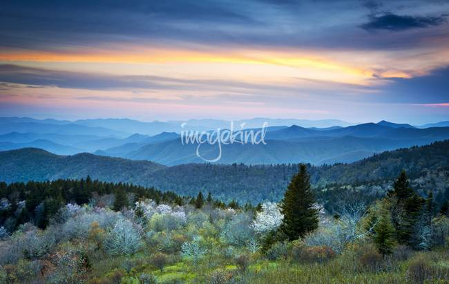 Blue Hour Blossoms - Blue Ridge Parkway in Spring