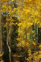 Fall in the Dixie  National Forest, UT USA