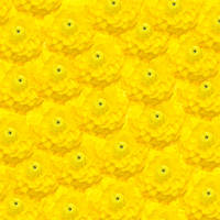 Yellow spring flower background.