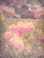 Vintage Style Lilacs