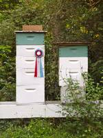 Prize Winning Bees