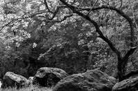 Harmony - trees and rocks (B&W)