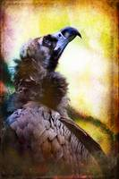 Portrait of a Cinerous Vulture Seeking Guidance