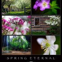 Spring Eternal at The Inn at Cedar Falls by Jim Crotty