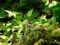 Mossy Stump and Tiny Plants