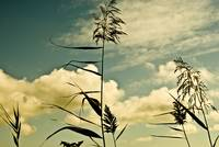Plants With Sky