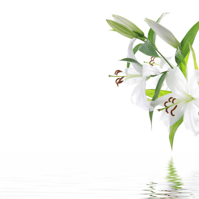 white lilia flower spa design background by b d s piotr marcinski