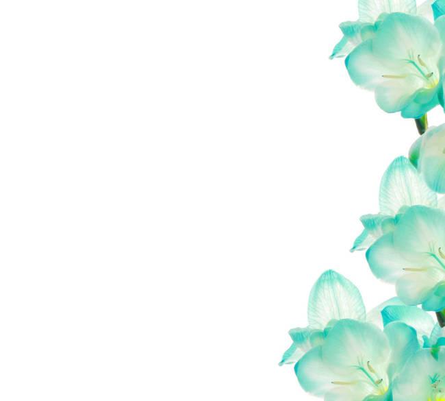 fresia flower border design by b d s piotr marcinski