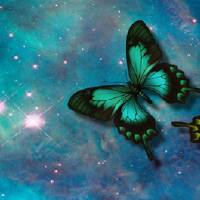 Carina Butterflies Art Prints & Posters by Linda and Fred Chamberlain