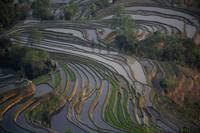 Rice Terraces ,Yunnan