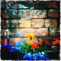 Flowers and worn brick wall