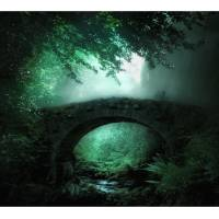 Emerald Forest photography Art Prints & Posters by Carmen Cordelia
