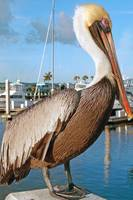 Pelican World
