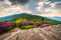 Jane Bald in Bloom - Roan Mountain Highlands Lands