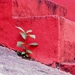 Small plant at red stairs