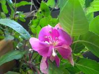 Pinkish Purple Flower