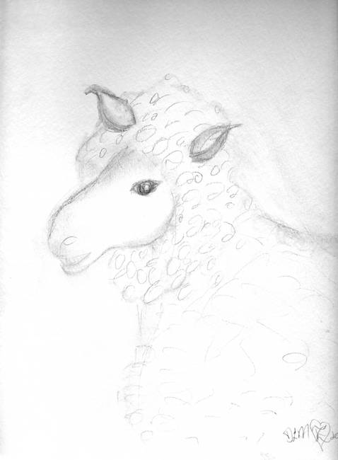 sketch of a sheep by dlmtleart 2011