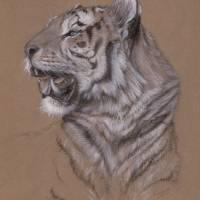 Tiger Art Prints & Posters by Freya Horn