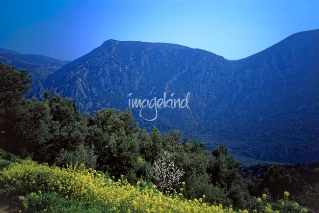 Springtime in Delphi, 2003