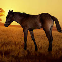 Pony in Golden Sunset by I.M. Spadecaller