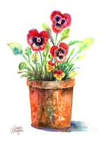 Pansies In A Clay Pot