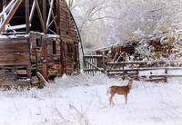 Rustic Barn and Deer by David Kocherhans
