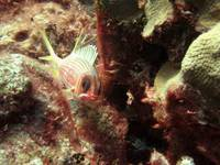 IMG_7119-Squirrelfish