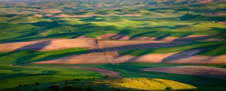 Palouse Ocean of Wheat