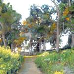 Meadow in Balboa Park by RD Riccoboni