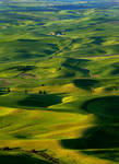 Palouse Morning Posters