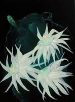 Cereus Unveiled_1
