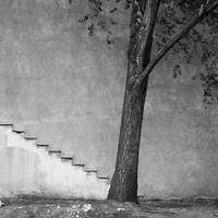 Tree and Stairs