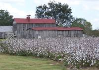 Mississippi Plantation