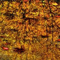 Autumns Looking Glass 4 Art Prints & Posters by Jennifer Stone