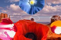 Red Poppy Desert