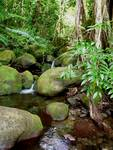 Hawaiian Jungle Stream