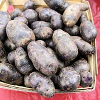 Peruvian purple fingerling potatoes