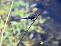 Dragonfly and orbs