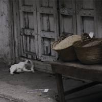 Zanzibar cats Art Prints & Posters by Katie Missimer