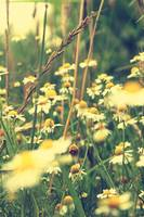 Vintage Flowers and Grass