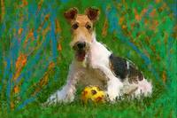 Wired Fox Terrier with ball
