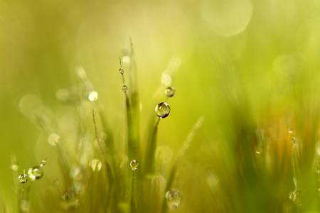 Close-up photography: Yellow Green Moss with Waterdroplets and sunshine with pretty bokeh