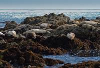 A Motley Pod of Seals