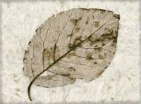 Skeleton Leaf on Rice Paper