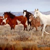 Band On The Run III by Jim Westin