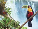 red breasted toucan by the falls Posters