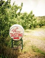 Wine Tasting in the Orchard