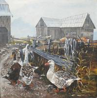 Farm Ducks